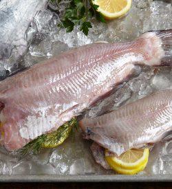 Fresh Whole Catfish